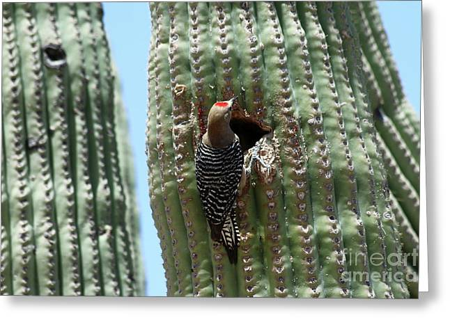 Woodpecker At The Nesting Hole Greeting Card by Christiane Schulze Art And Photography