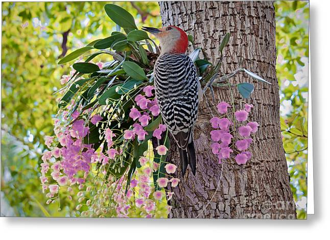 Woodpecker Heaven Greeting Card