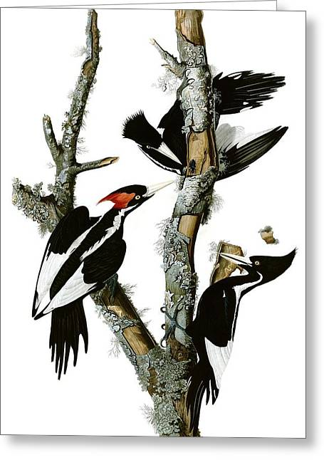 Woodpecker Greeting Card by MotionAge Designs