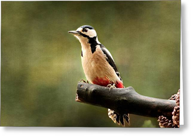Woodpecker Texturepicture Greeting Card by Heike Hultsch
