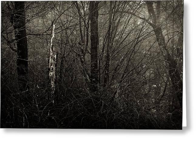 Woodprecker Tree Greeting Card by Bob Orsillo