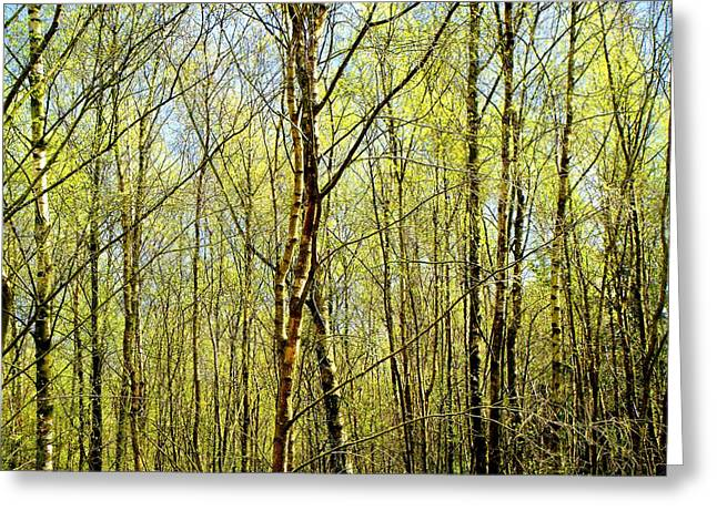 Woods 2 Greeting Card by Roberto Alamino