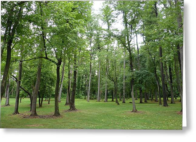 Woods At Lake Redman Greeting Card by Donald C Morgan