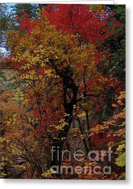 Woods In Oak Creek Canyon, Arizona Greeting Card