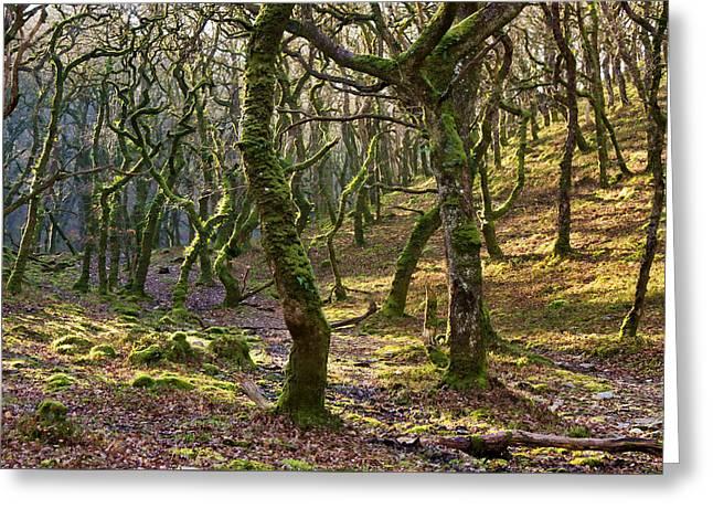 Woods Near Badgeworthy Water Exmoor Greeting Card