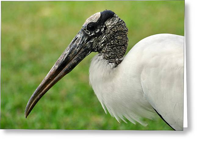 Woodstork Greeting Card by Rose  Hill