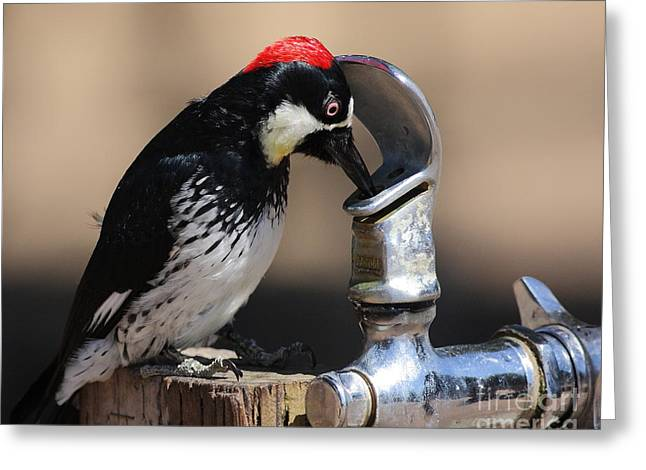 Woody And The Water Fountain Greeting Card by Wingsdomain Art and Photography