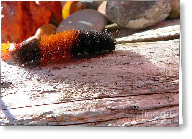 Woolly Bear Caterpillar Greeting Card by Larry Keahey