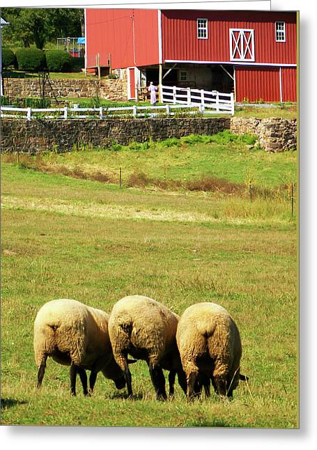 Wooly Bully Greeting Card by Trish Tritz