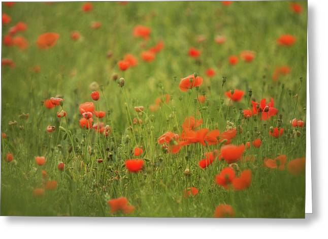 Worcestershire Poppy Field Greeting Card by Wayne Molyneux