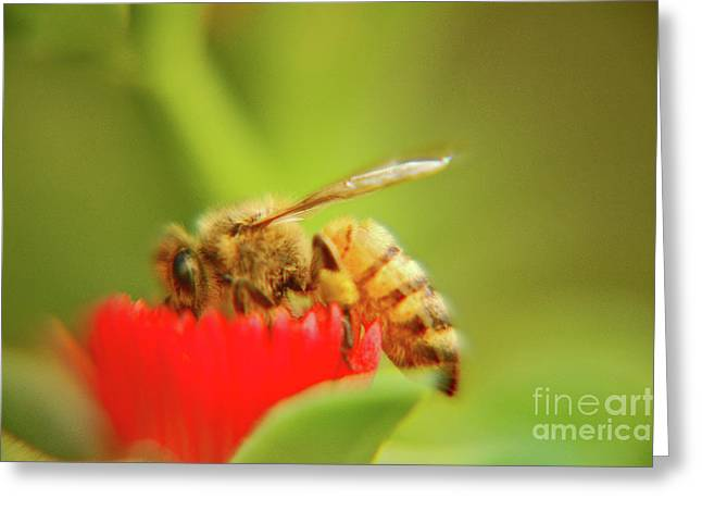 Greeting Card featuring the photograph Worker Bee by Micah May