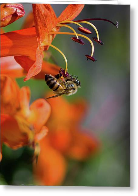 Working Bee Greeting Card by Stelios Kleanthous