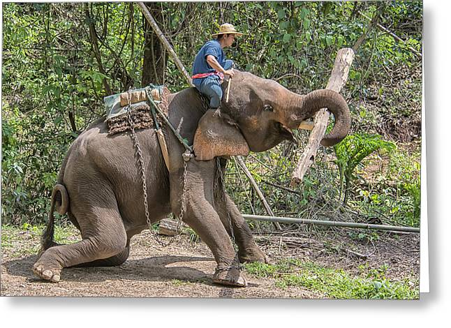 Greeting Card featuring the photograph Working Elephant by Wade Aiken