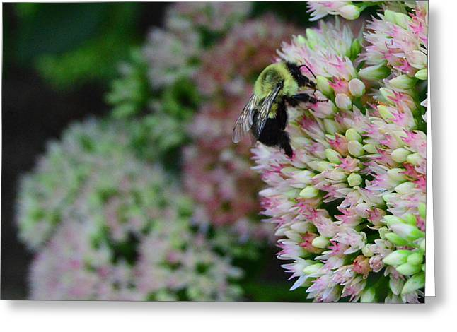 Working In The Garden Greeting Card by Jimi Bush