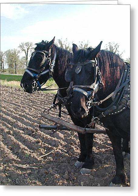Working Percherons Greeting Card by Laurie With