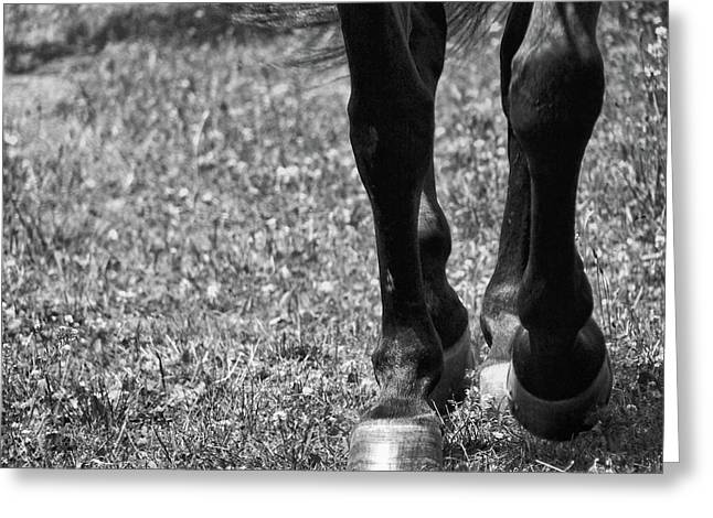 Working Trot Greeting Card by JAMART Photography