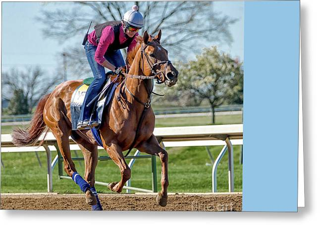 Thoroughbred Workout Greeting Card by Catherine Balfe