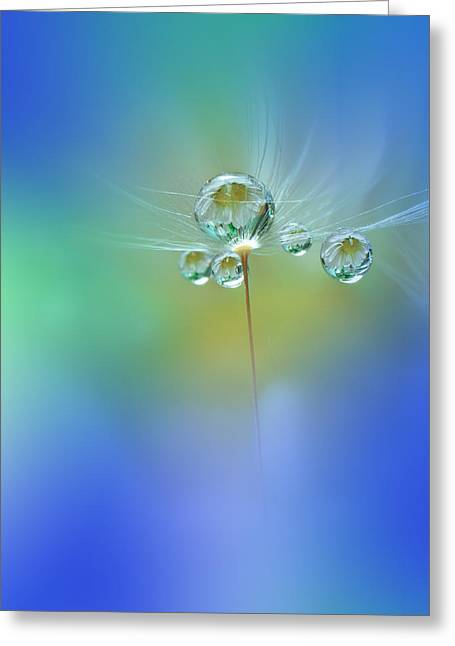 World Of Drops Greeting Card by Juliana Nan