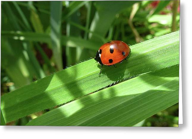 World Of Ladybug 1 Greeting Card