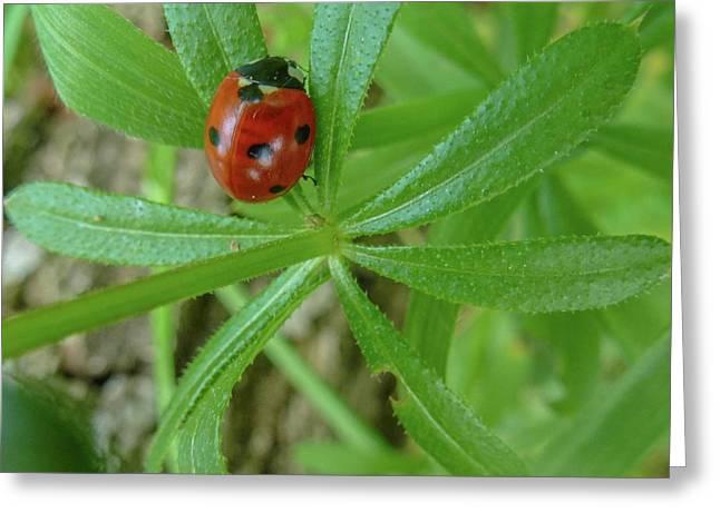 World Of Ladybug 3 Greeting Card by Jean Bernard Roussilhe