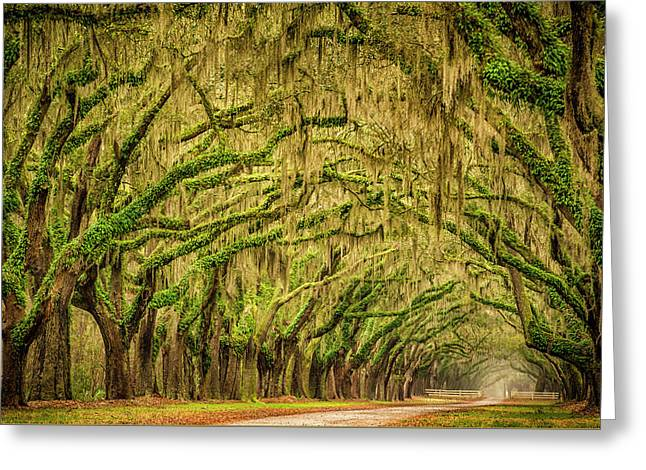 Wormsloe Drive Greeting Card by Phyllis Peterson