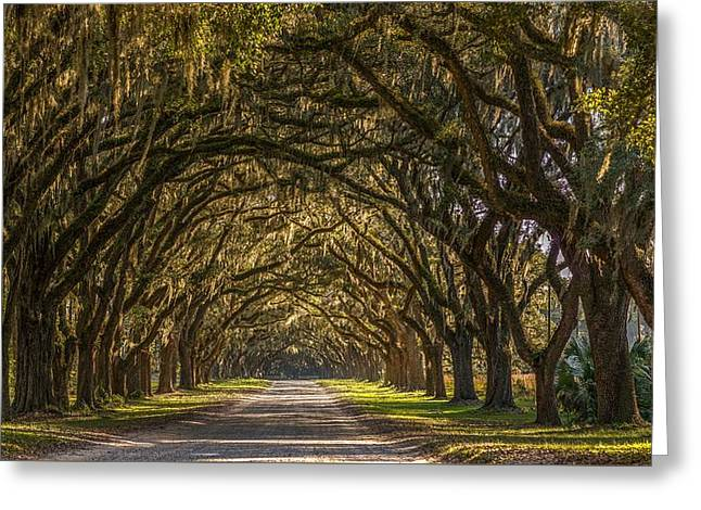 Wormsloe Historic Site Greeting Card