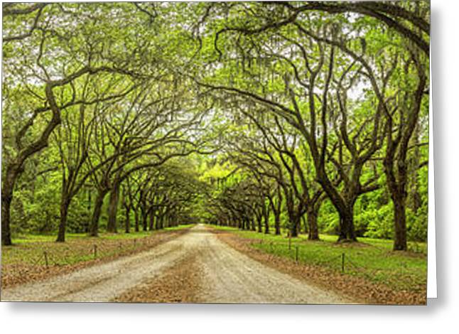 Wormsloe Path Greeting Card by Jon Glaser