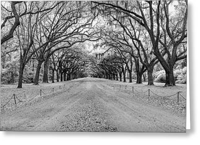 Greeting Card featuring the photograph Wormsloe Pathway by Jon Glaser