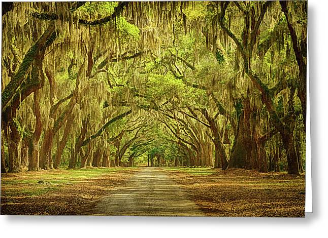 Wormsloe Plantation Oaks Greeting Card by Priscilla Burgers