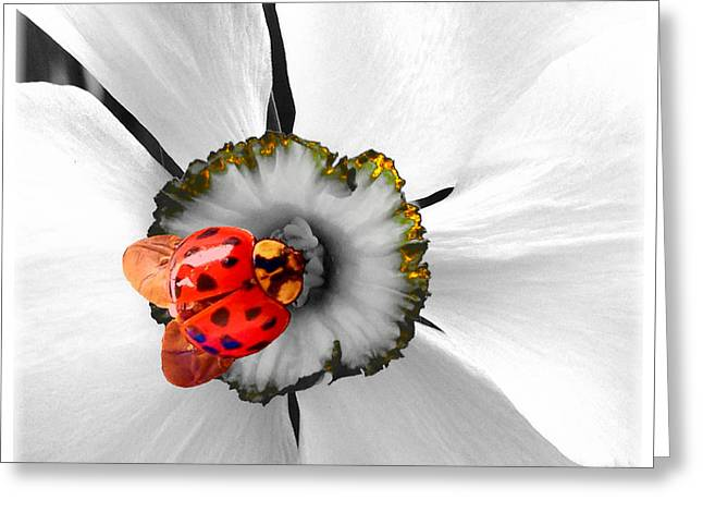 Wow Ladybug Is Hot Today Greeting Card