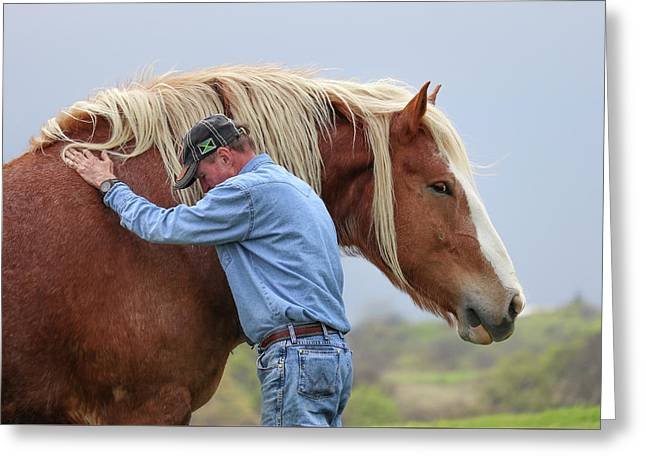 Wrangler Jeans And Belgian Horse Greeting Card