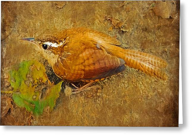 Wren Song Greeting Card by Anna Louise