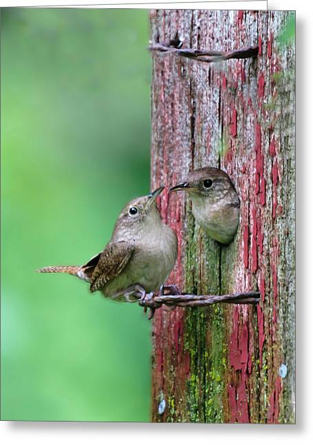 Greeting Card featuring the photograph Wrens by John Hix