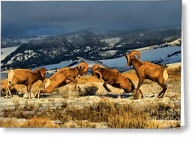Wyoming Bighorn Brawl Greeting Card