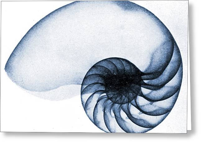 X Ray Of A Nautilus Greeting Card