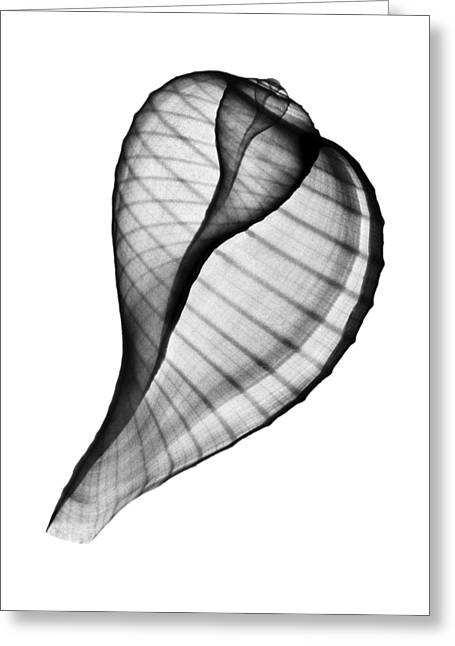 Xray Photo Of Fig Shell Ficus Ficus Positive  Greeting Card