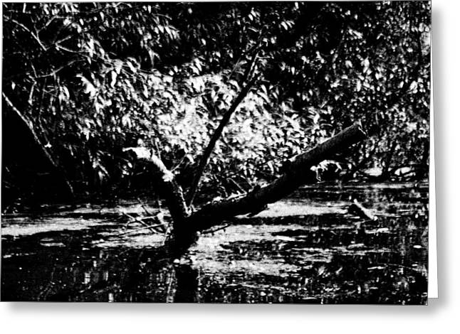 Y Shaped Tree In River Stour Near Flatford Greeting Card by Mike Chen