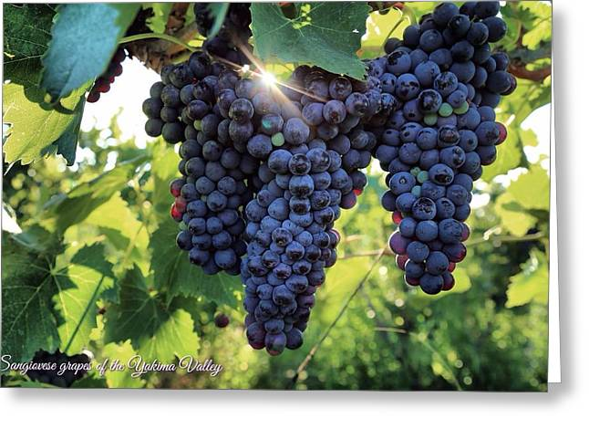 Yakima Valley Grapes Greeting Card by Lynn Hopwood