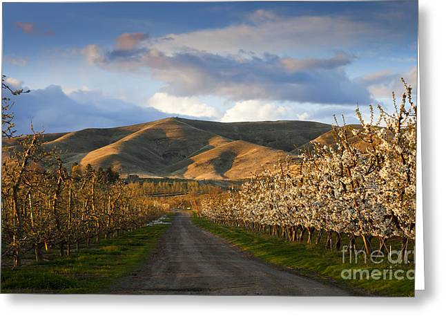 Yakima Valley Spring Greeting Card by Mike  Dawson