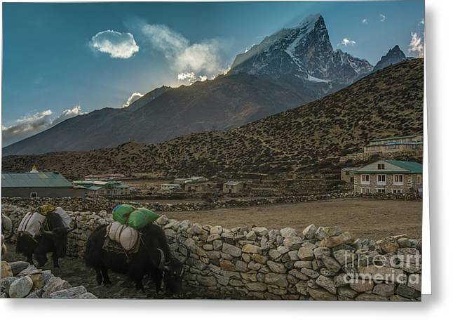 Greeting Card featuring the photograph Yaks Moving Through Dingboche by Mike Reid
