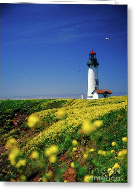 Yaquina Head Lighthouse- V2 Greeting Card