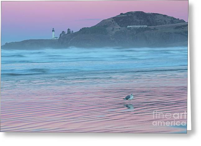 Yaquina Twilight Reflections Greeting Card by Richard Sandford