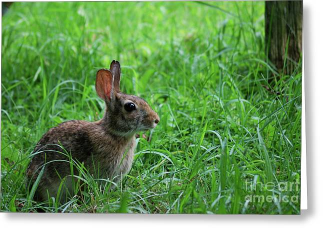 Yard Bunny Greeting Card
