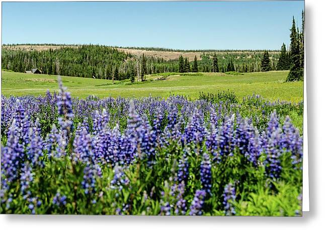 Yard Full Of Wildflowers Greeting Card