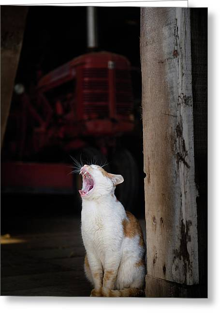 Greeting Card featuring the photograph Yawning Barn Cat And Tractor by Dennis Dame