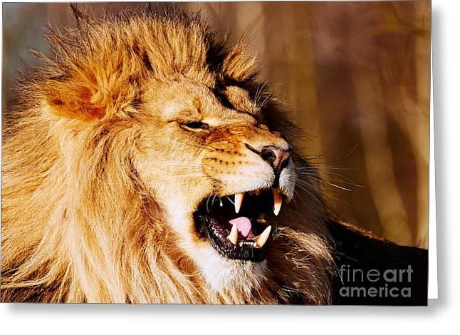 Yawning Lion Greeting Card by Nick Biemans
