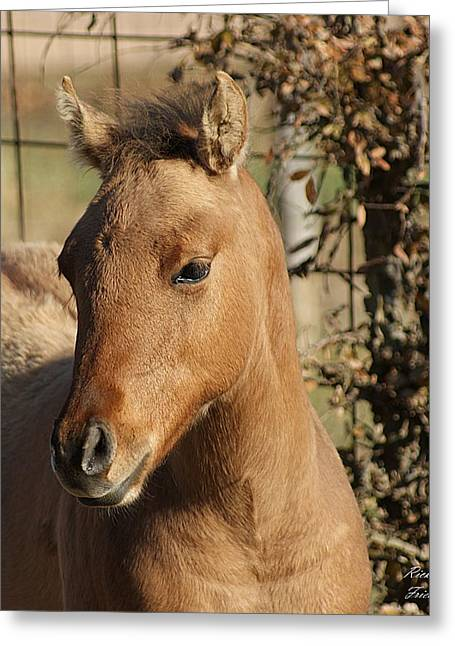 Greeting Card featuring the photograph Yearling by Rick Friedle