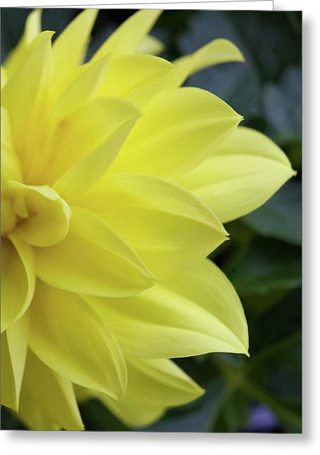 Alan Look Greeting Cards - Yellow Greeting Card by Alan Look
