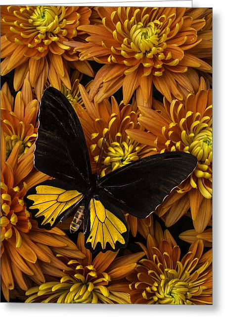 Yellow And Black Butterfly On Mums Greeting Card by Garry Gay