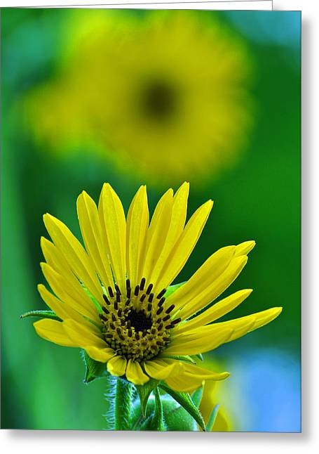Yellow And Green 3 Greeting Card by Peter  McIntosh